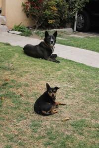 Lobo and Bobo